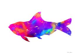 Hippy Rainbow Fish