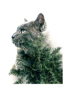 Outdoorsy Cat II