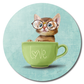 Kitten with glasses
