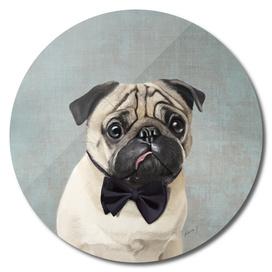 Mr Pug