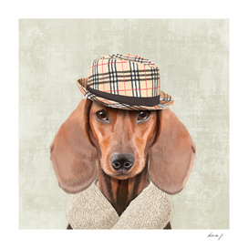 Mr Dachshund