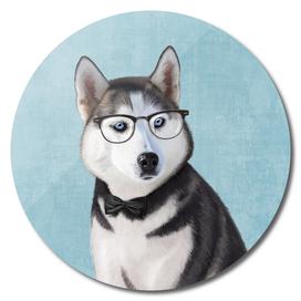Mr Husky