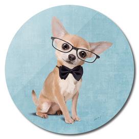 Mr Chihuahua