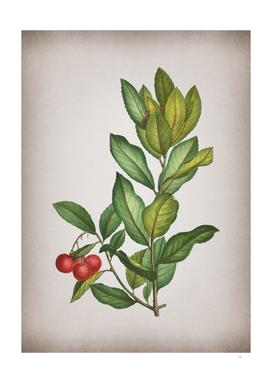 Vintage Strawberry Tree Branch Botanical on Parchment