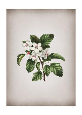 Vintage Sweet Crabapple Botanical on Parchment