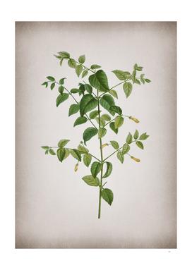 Vintage Tree Fuchsia Botanical on Parchment