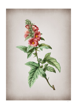 Vintage Tree Mallow Botanical on Parchment
