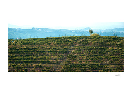 Italian vineyards. Calosso Piedmont 07