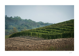 Italian vineyards. Calosso Piedmont 04