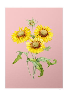 Vintage Blanket Flowers Botanical on Pink