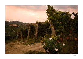 Italian vineyards. Calosso Piedmont 02