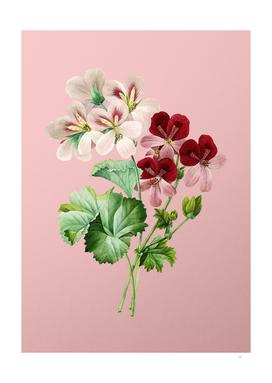 Vintage Crane's Bill Geranium Botanical on Pink