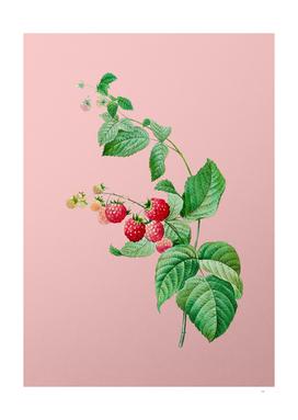 Vintage Red Berries Botanical on Pink