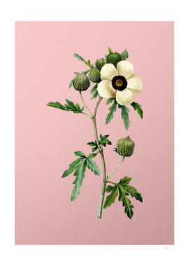 Vintage Venice Mallow Botanical on Pink