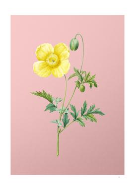 Vintage Welsh Poppy Botanical on Pink