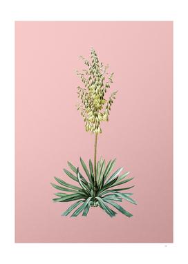 Vintage Adam's Needle 2 Botanical on Pink