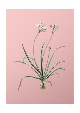 Vintage Allium Fragrans Botanical on Pink