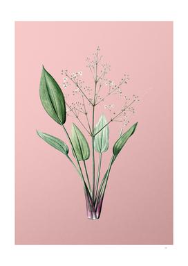 Vintage European Water Plantain Botanical on Pink