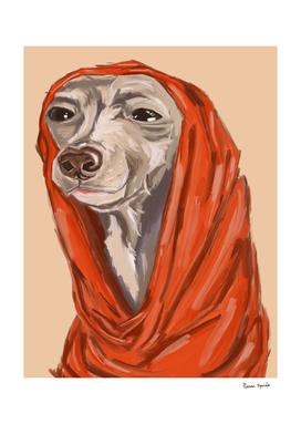 the peaceful greyhound
