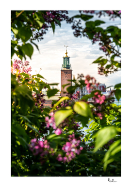 Stockholm City Hall in Summer Greens