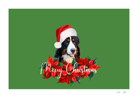 bernese dog santa claus poinsetta