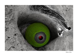 De olho...