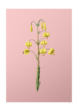 Vintage Lilium Pyrenaicum Botanical on Pink