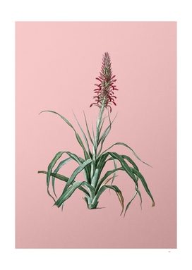 Vintage Pina Cortadora Botanical on Pink