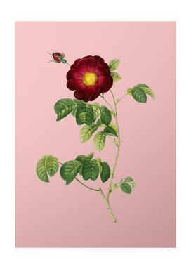 Vintage Rose Botanical on Pink