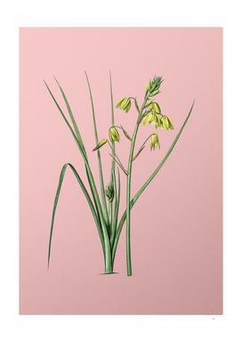 Vintage Slime Lily Botanical on Pink