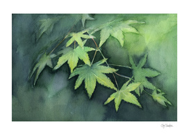 Japanese Maple Watercolor