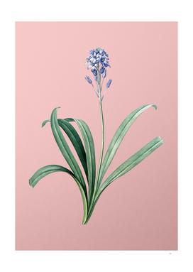 Vintage Spanish Bluebell Botanical on Pink