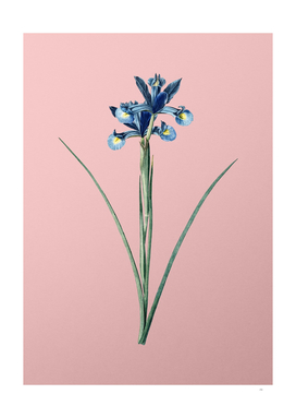 Vintage Spanish Iris Botanical on Pink