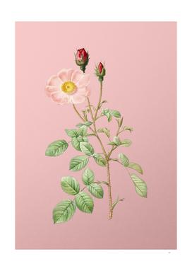 Vintage Sparkling Rose Botanical on Pink