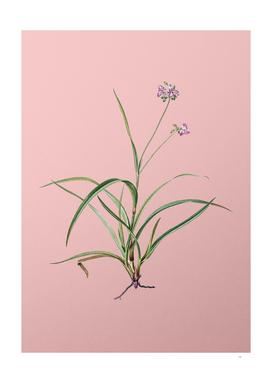 Vintage Spiderwort Botanical on Pink