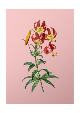 Vintage Turban Lily Botanical on Pink