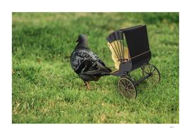 Pedicab Pigeon