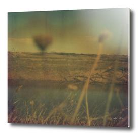 Polaroid 16