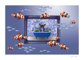 clownfish frame french bulldog