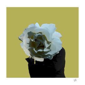 White Rose Waiting