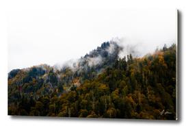 Misty Fall