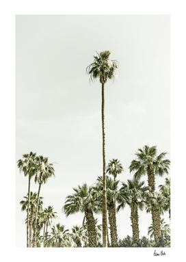 Palm Trees Summertime | Vintage