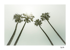Palm Trees in the sun | Vintage