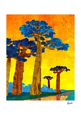 Big baobabs