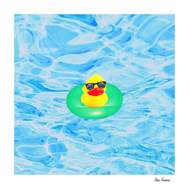 Duck in Swimming Pool