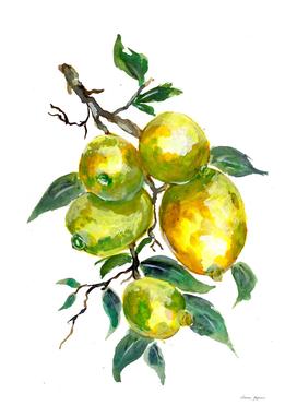 Lemon Fruits on a Tree Branch