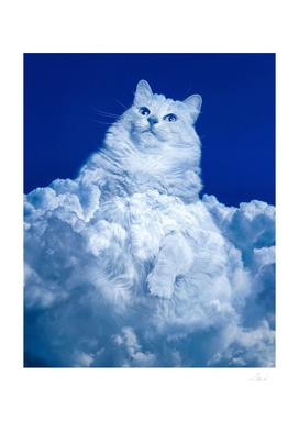 Cumulus Cat
