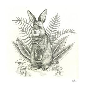 Rabbit line art