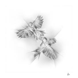 Silver Lovebirds
