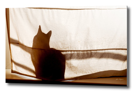 Shadow of a cat